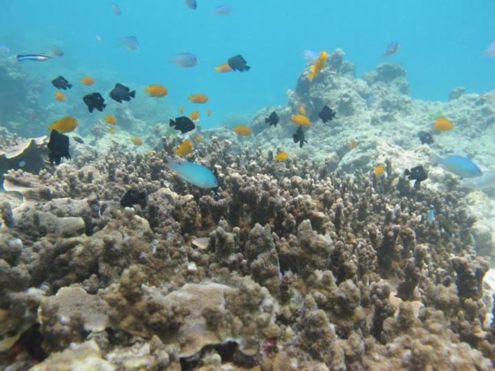 coral island Phuket reef