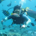 coral island diving