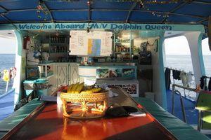 Dolphin Queen deck