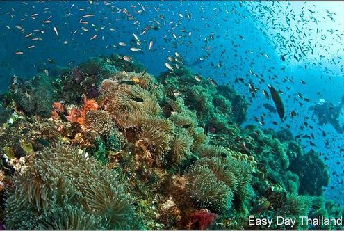Anemone Reef Phuket dive site