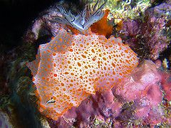 Christmas Point Similan Islands dive site