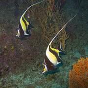 Koh Samui diving | ดำน้ำ เกาะสมุย