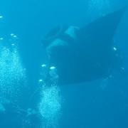 Koh Tachai diving / เกาะตาชัย