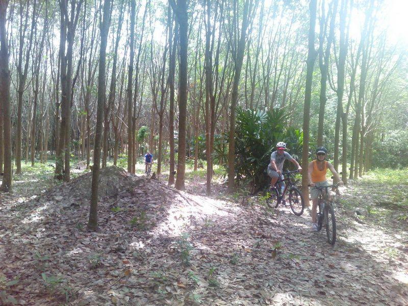 Phuket Mountain Biking in the rubber plantations