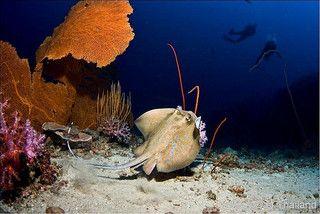 Shark Point dive site