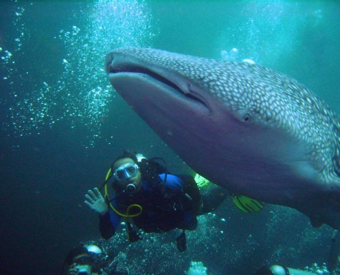 where to dive with whale sharks