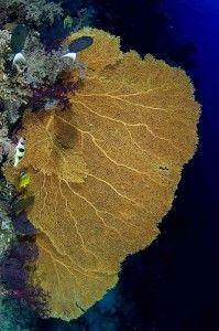 Thailand dive sites. แหล่งดำน้ำใน ประเทศไทย