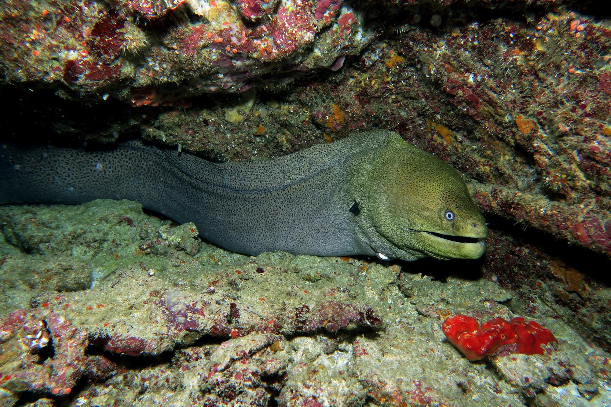 similan islands night dive 10