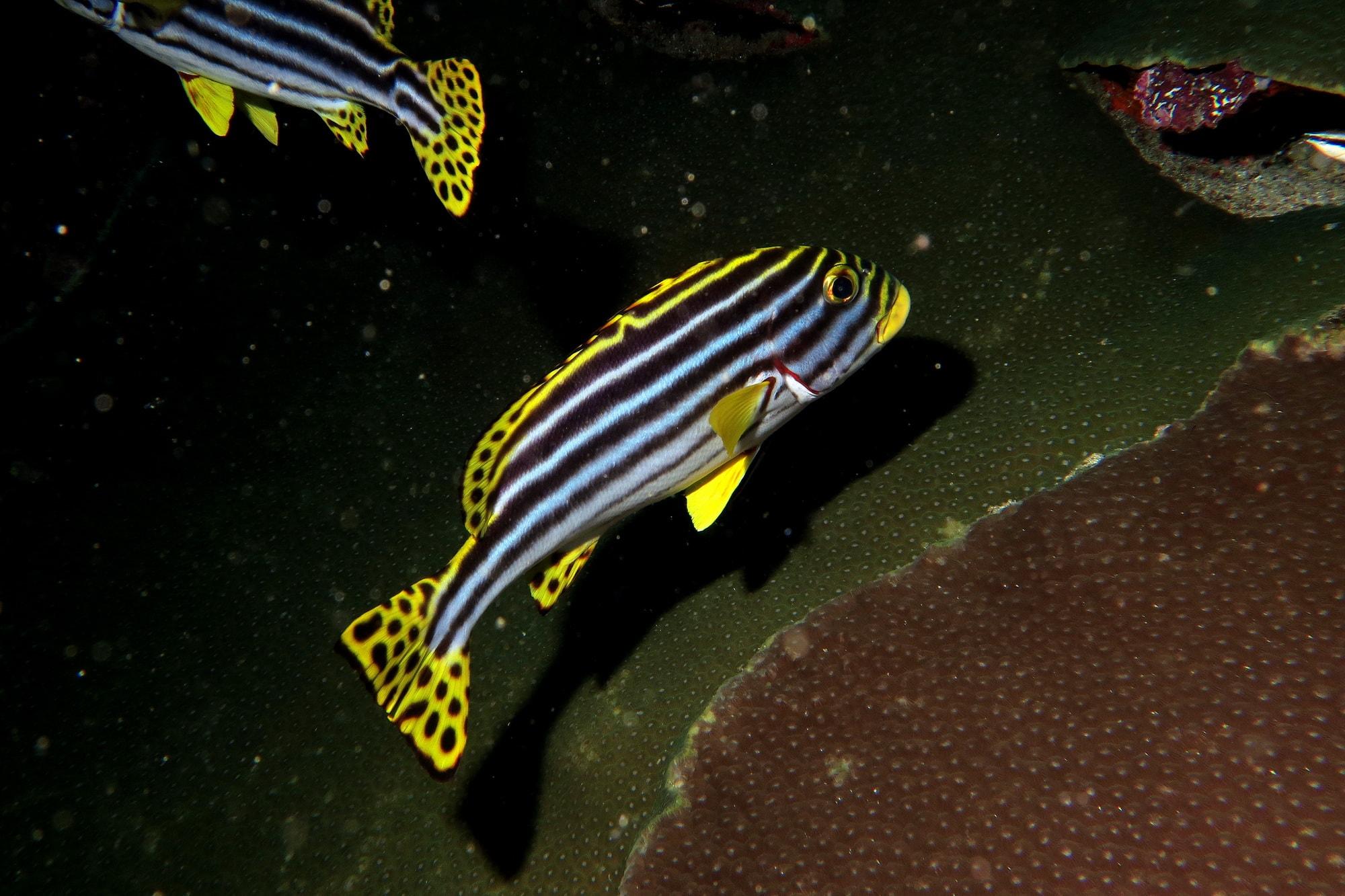 similan islands night dive