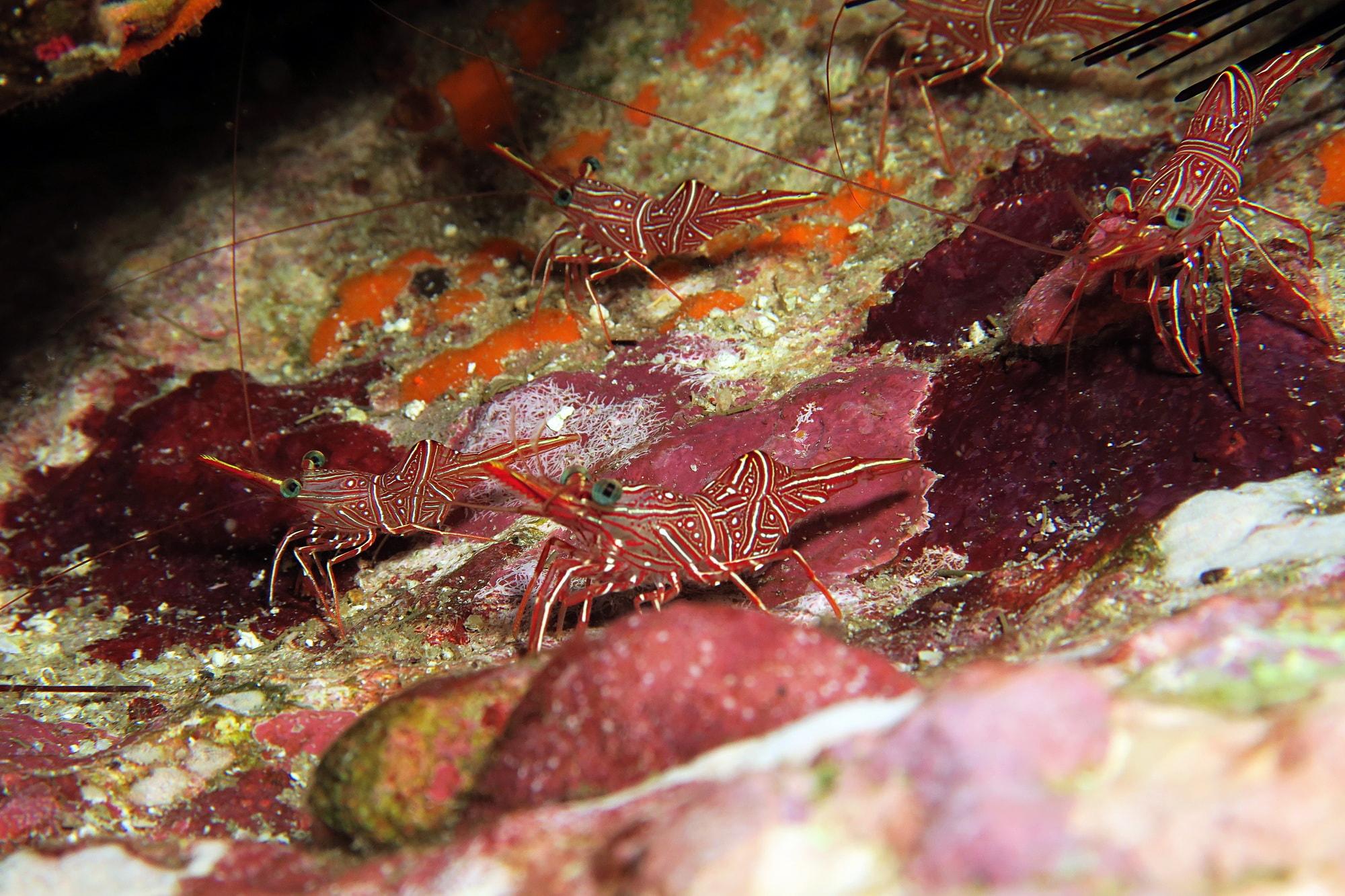 similan islands night dive 12