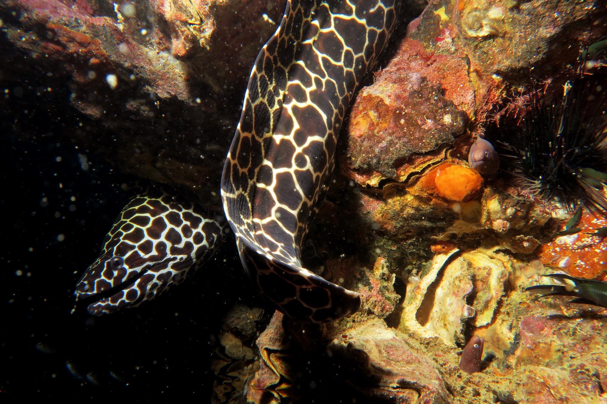 similan islands night dive 13