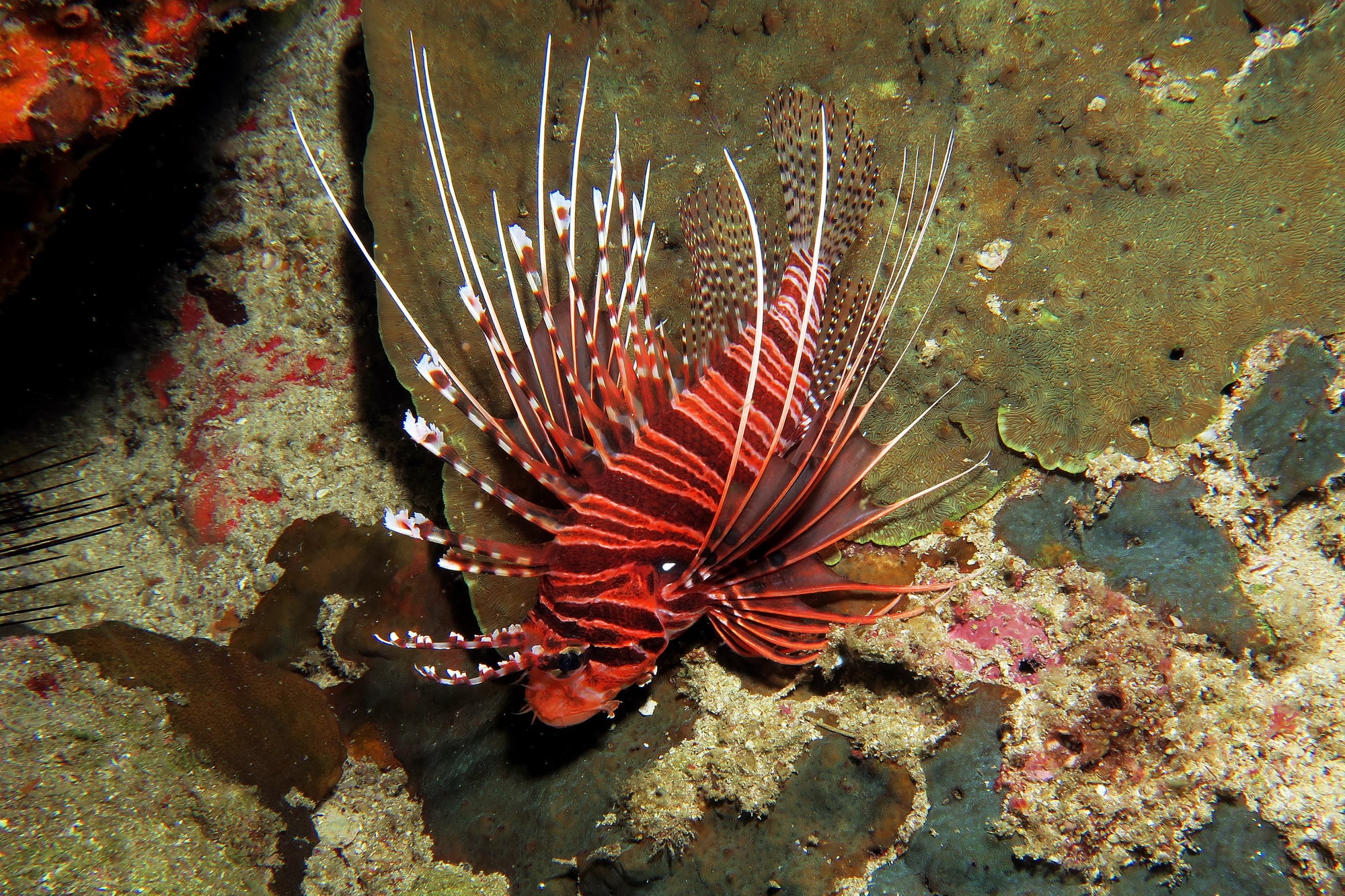 similan islands night dive 16