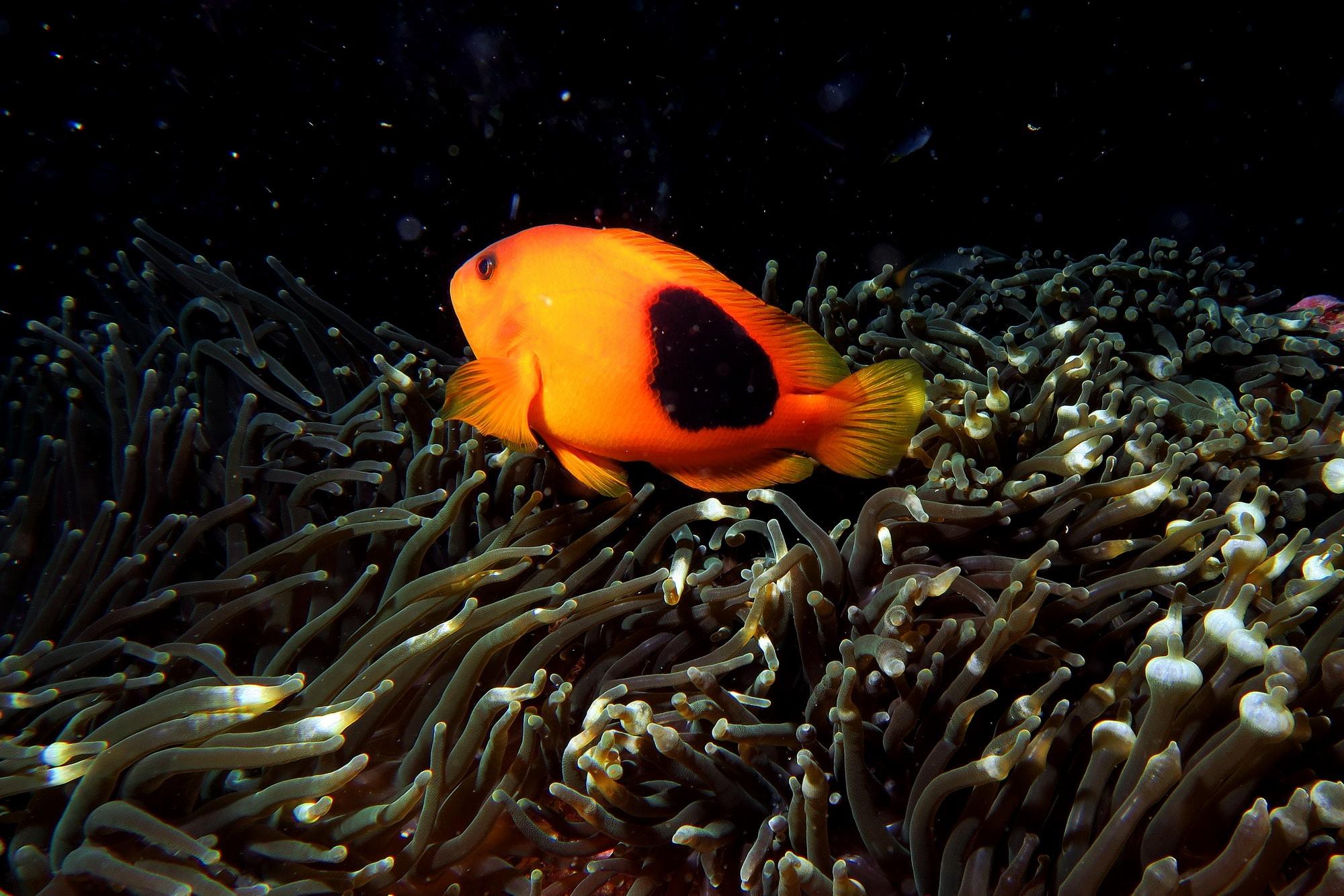 similan islands night dive 21
