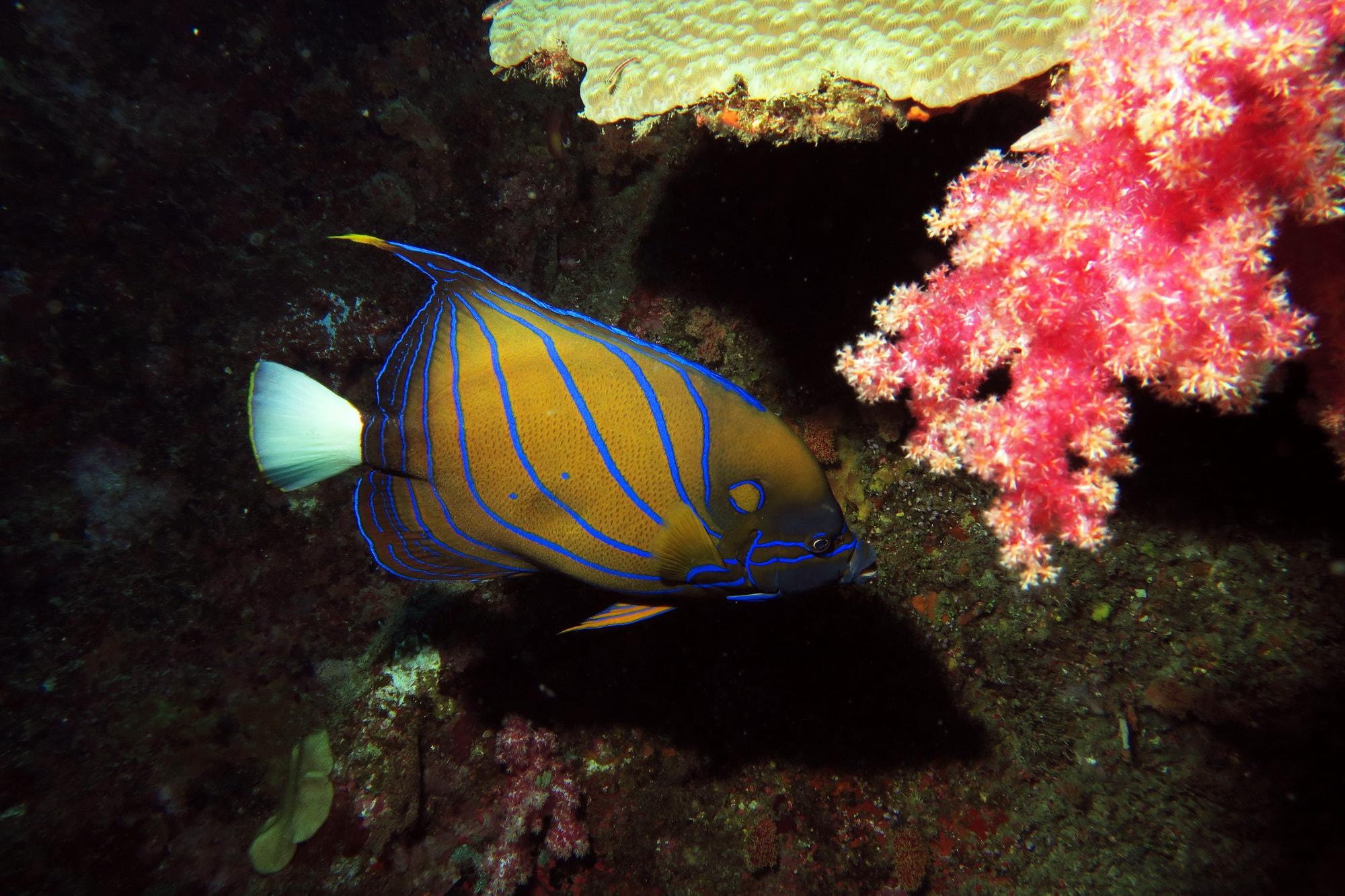 similan islands night dive 4