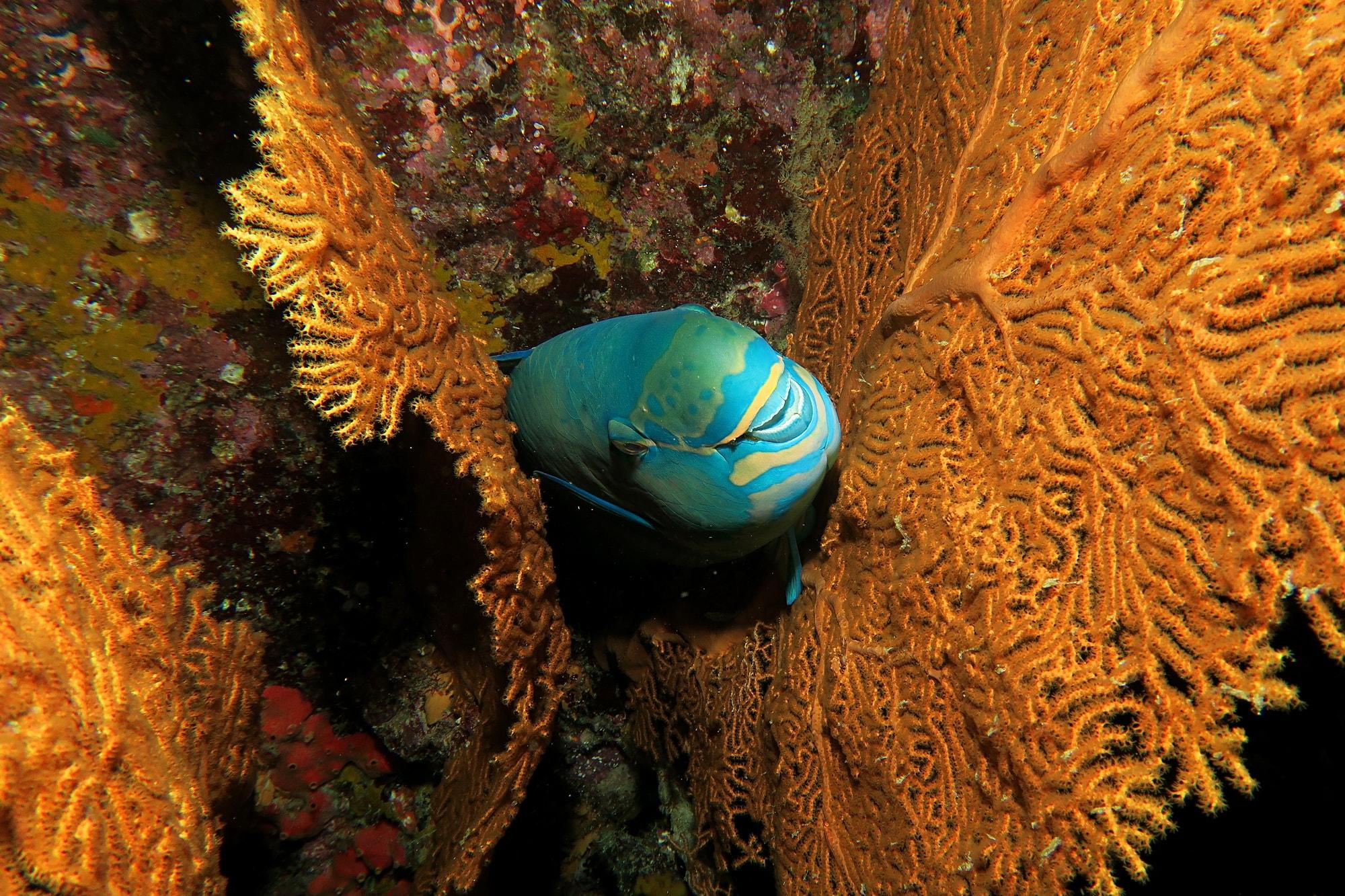 similan islands night dive 5
