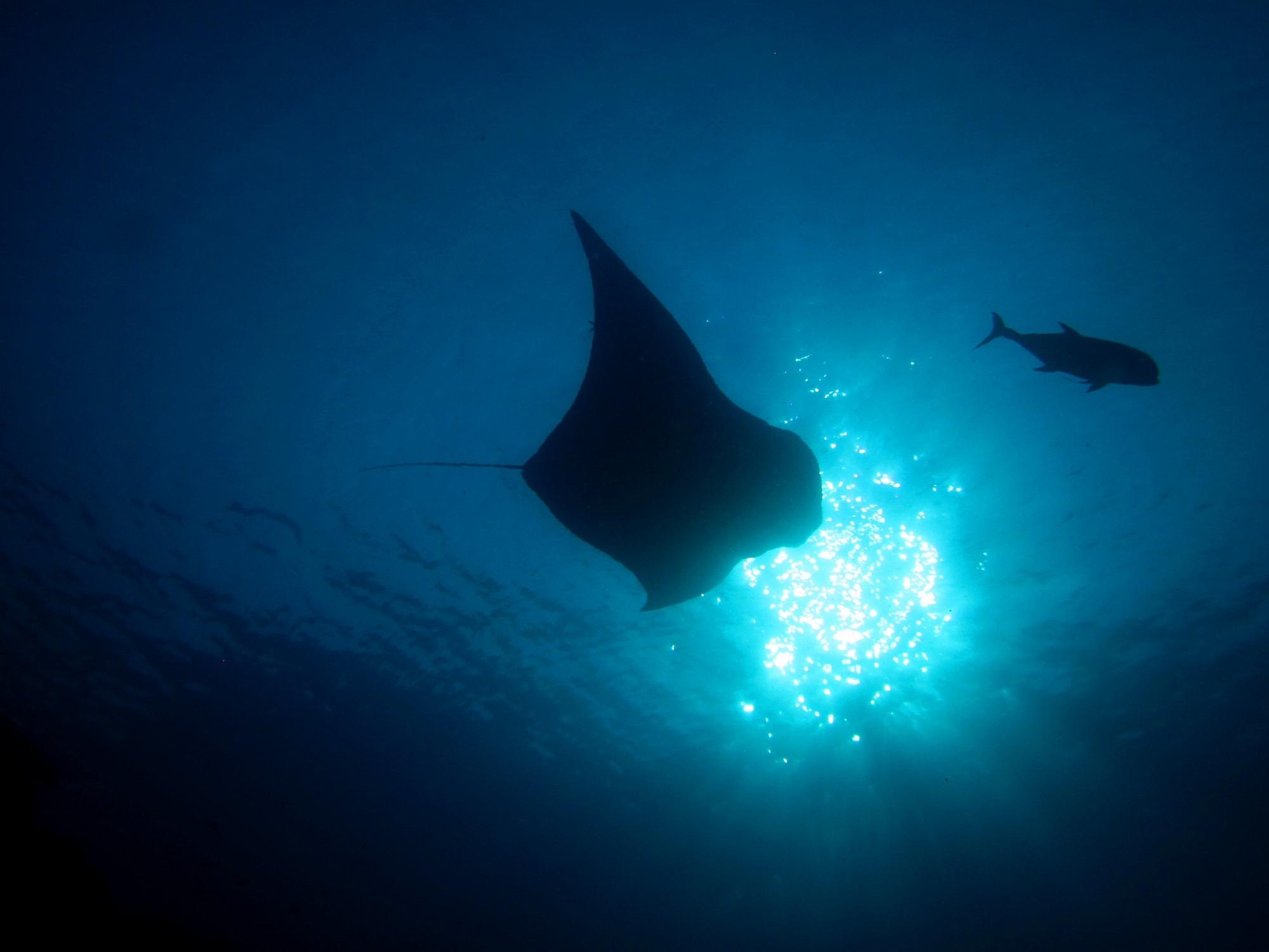 koh lanta diving day trips