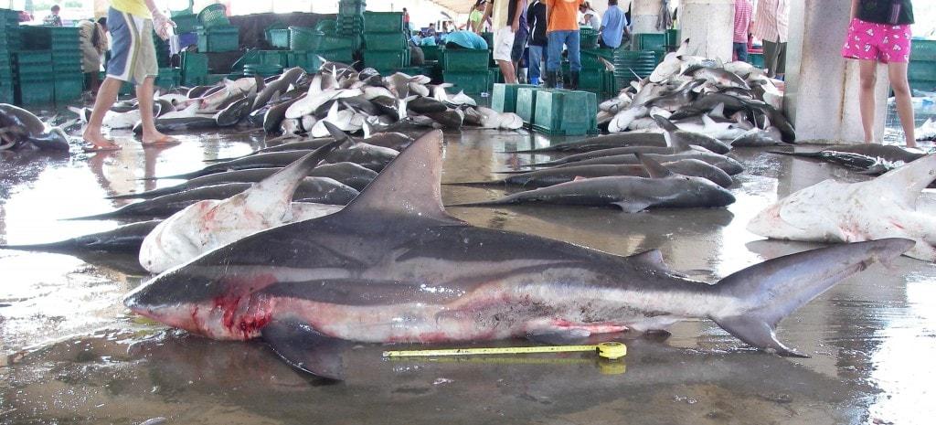 Ranong fish market