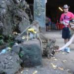 monkey cave temple phang nga