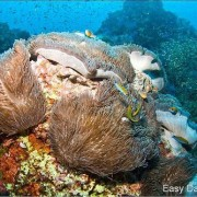 Diving Phi Phi dive sites - สถานที่ดำน้ำ เกาะ พีพี